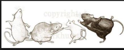 rats-dancing
