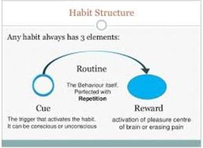 structure-of-a-habit