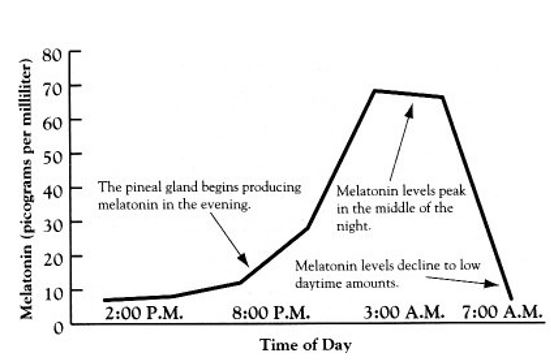 mELATONIN-IMAGE