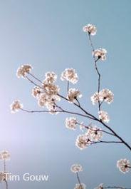 Blossom and grow