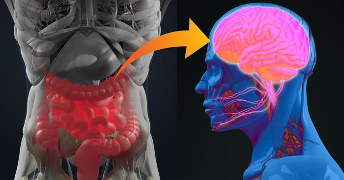 Gut-brain connection.jpg